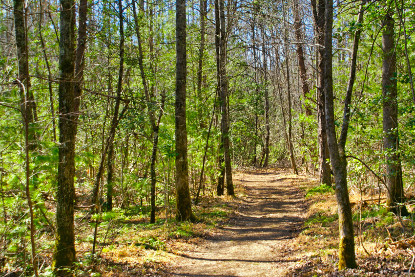 wooded land with trail